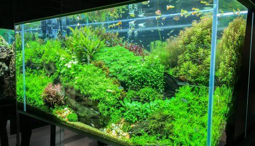 「グリーンアクアリウム展」がパワーアップして「グランツリー武蔵小杉」に帰ってきた! AQUARISTと盆栽アーティストとフラワーアーティストが奏でる壮大な世界観!