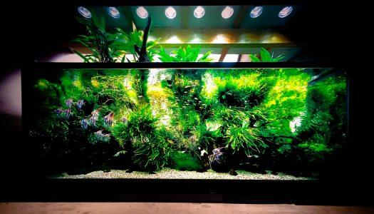 大規模ネイチャーアクアリウム展覧会「天野 尚 NATURE AQUARIUM展」で自然美と水槽が融合した生きたアートを体感
