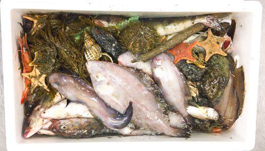 見たこともない深海魚に子供も大人も大興奮! 深海魚を眺めて食べる会『深海ギョッチ』潜入レポート