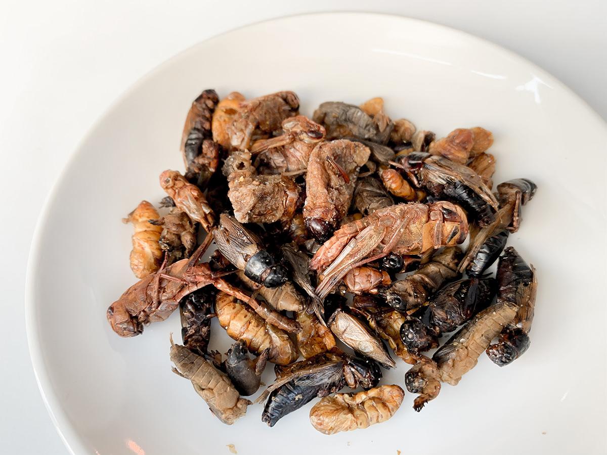 昆虫ミックス5種類皿あけ